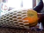 Fuking papaya for femdom